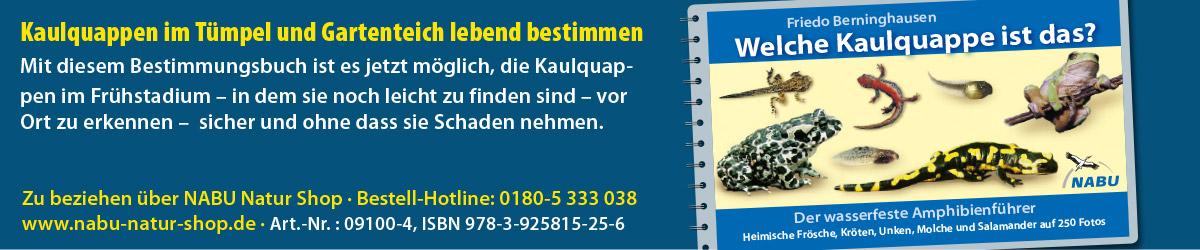 AZ-Froschbuch-online2